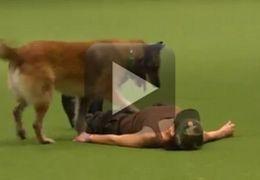 Cachorro aprende a fazer massagem cardíaca