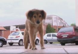 Cachorro mora em escola há 16 anos