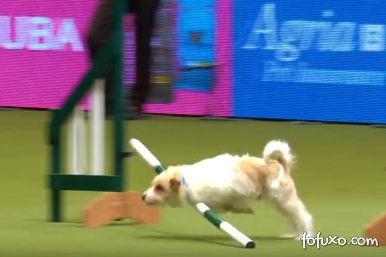 Cachorro atrapalhado perde competição, mas ganha internautas