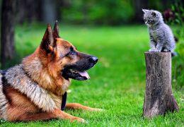 Brasil está na lista dos países com mais animais de estimação do mundo