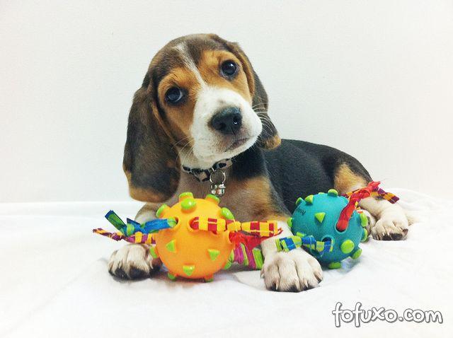 Dicas para evitar problemas com os brinquedos dos pets