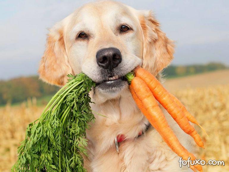 Confira os melhores vegetais para inserir na comida dos cachorros