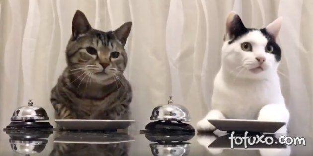Gatos que pedem comida viralizam na internet