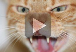 Vídeo mostra gato odiando a carteira
