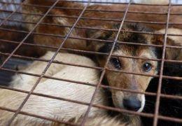 Taiwan afirma que carne de cachorro não poderá mais ser consumida