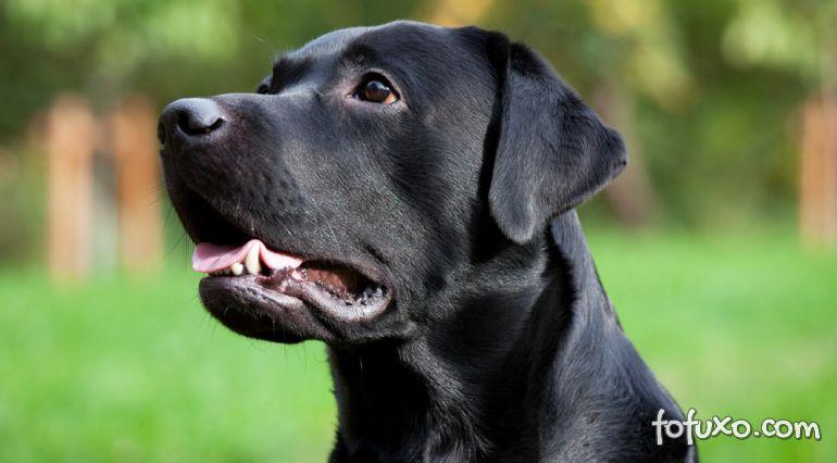 Confira quais são as vitaminas importantes para os cachorros