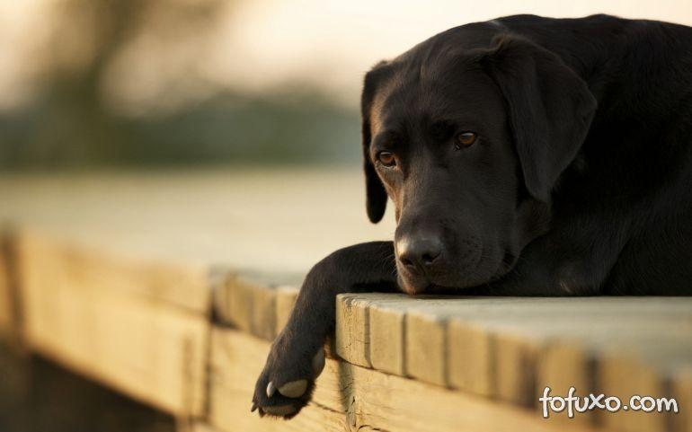 Saiba como lidar com cães em luto