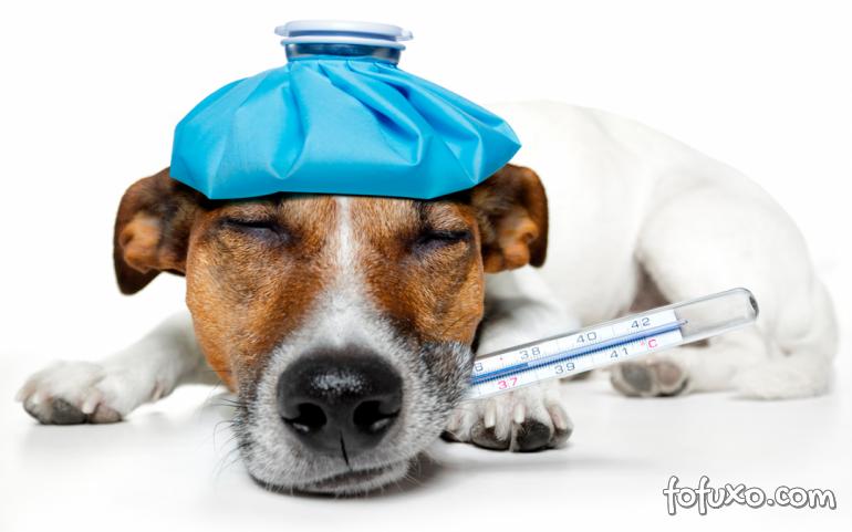 Dicas para combater o resfriado canino