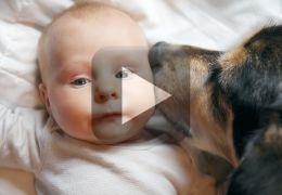 Esse cachorro não quer deixar de ser o bebê da casa