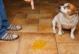 Dicas para corrigir cão que faz xixi em todos os lugares