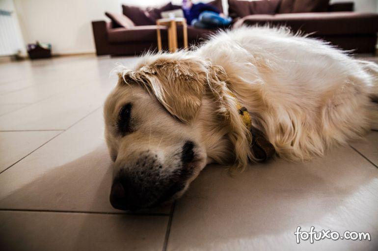 Entenda as tremedeiras dos cachorros enquanto eles dormem