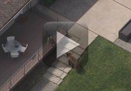 Cachorro corre atrás de urso que invadiu casa