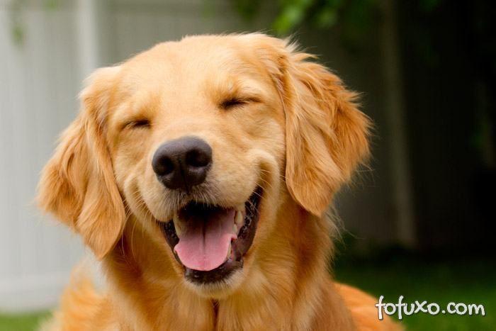 Polêmica: Humanos teriam tanto olfato quanto os cães
