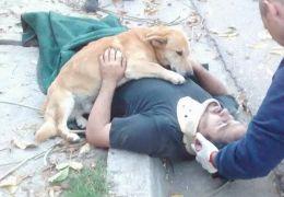 Cachorro se recusa a abandonar dono após acidente