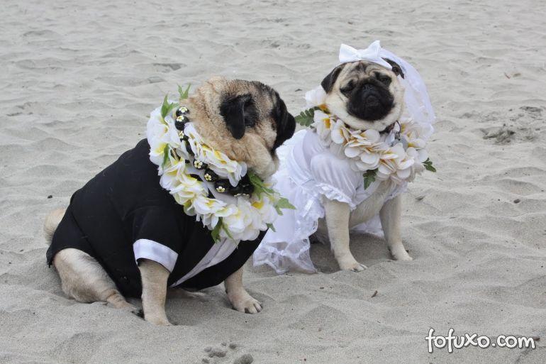 Dicas para incluir o animal de estimação na cerimônia de casamento