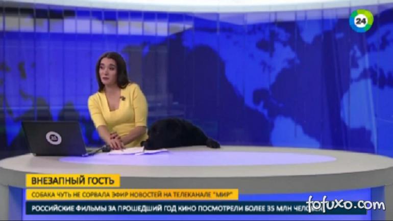 Cachorro aparece durante transmissão de telejornal
