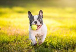 Confira os nomes de cachorros mais populares do Brasil