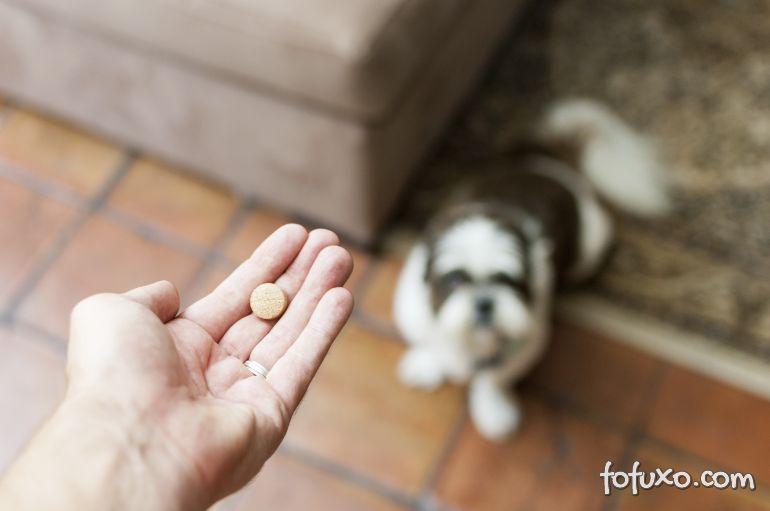 Confira remédios proibidos para os seus cães