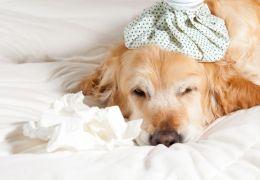 Confira sinais de que o seu cachorro pode estar gripado