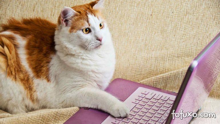 Pesquisa afirma que vídeos de gatos fazem bem para saúde