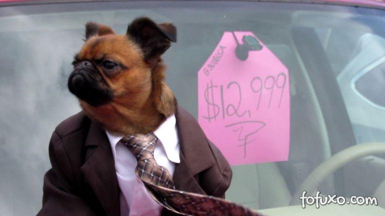 Conheça o cachorro que virou vendedor de carros