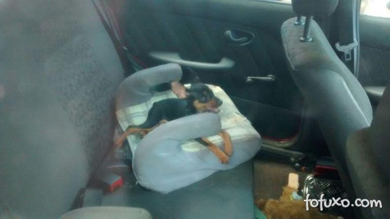 Saiba os perigos de deixar o cachorro trancado dentro do carro