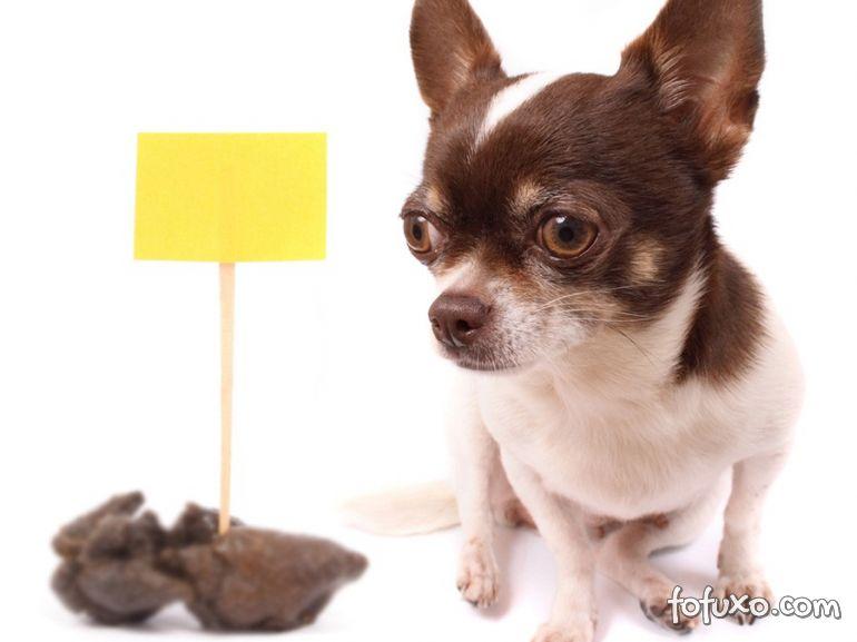Por que o cachorro come fezes?