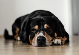 Confira algumas receitas caseiras para cuidar do seu cão