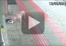 Cachorrinha que rouba potes faz sucesso na internet