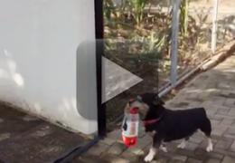 Cachorro fica famoso comprando sua própria ração