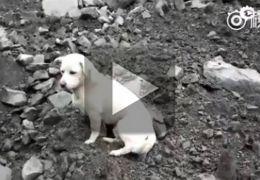 Conheça a história emocionante do cão que procura o dono entre escombros
