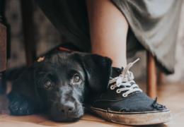 Confira as melhores fotos de cães do ano