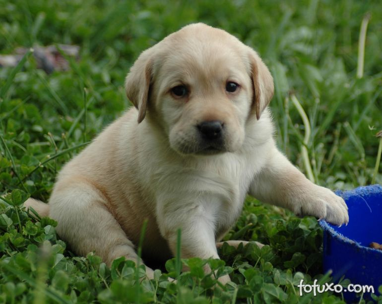Confira os 5 principais cuidados com a saúde dos filhotes de cachorros