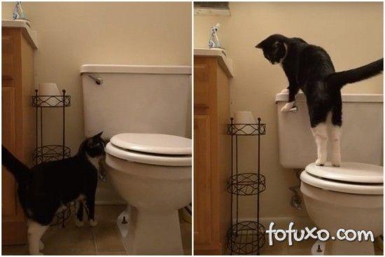 Homem flagra gato dando descarga e desperdiçando água
