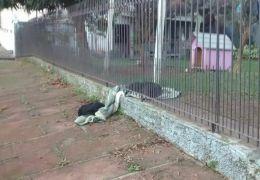 Cadela divide coberta com cão de rua e emociona a internet