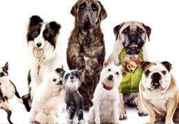 Dicas para escolher a raça de cachorro ideal