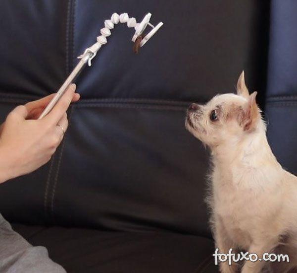 Conheça o acessório que promete ajudar a tirar fotos de cães com o celular