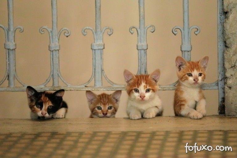 Documentário mostra a vida de gatos em Istambul