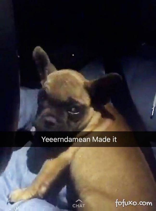 Companhia aéreas embarca cachorro e dono em voos separados