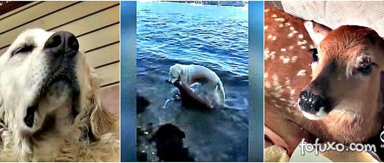 Cachorro resgata filhote de cervo do mar