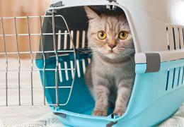Dicas para fazer o gato se acostumar com a caixa de transporte