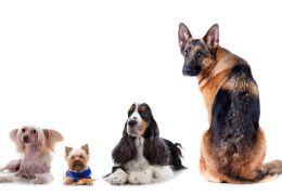 Entenda os mitos relacionados a idade do cachorro