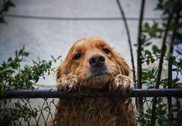 Entenda os motivos que podem levar o cachorro a fugir de casa
