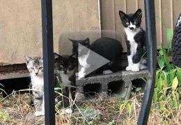 Vídeo mostra gato com uma estranha silhueta em seu nariz