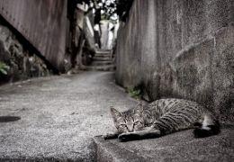 Dicas para conquistar a confiança de um gato de rua