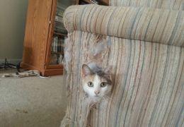 Dicas para fazer o gato parar de arranhar o sofá