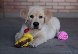 Conheça a nova tendência das redes sociais: os Dog Influencers