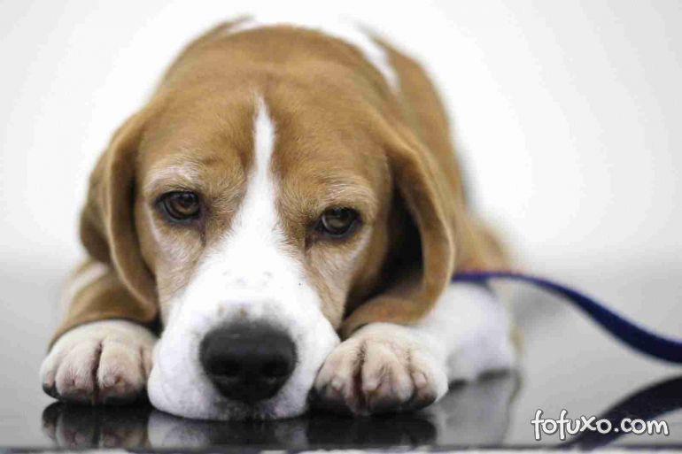Confira os principais tipos de vermes dos cães