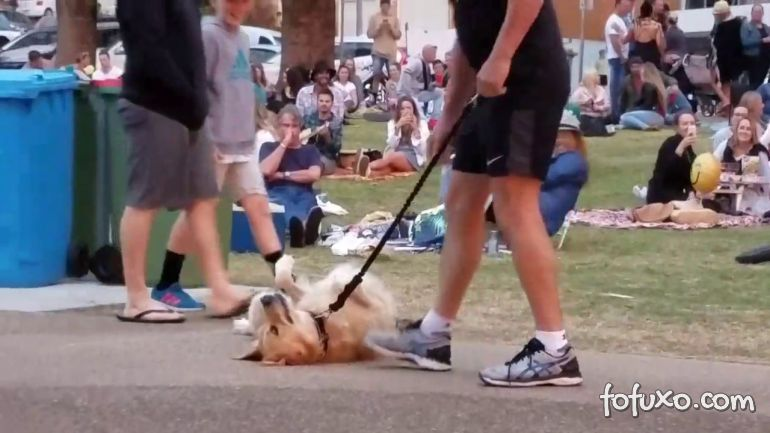 Vídeo flagra cachorro se recusando a ir embora de parque