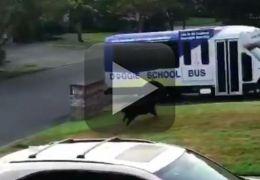 Cachorro corre e entra em ônibus escolar